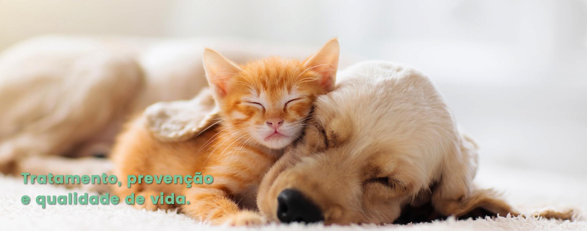 Reabilitavet - Clínica de fisioterapia e reabilitação animal